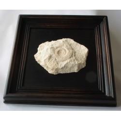 Obraz z amonitem jurajskim Na szczęście I